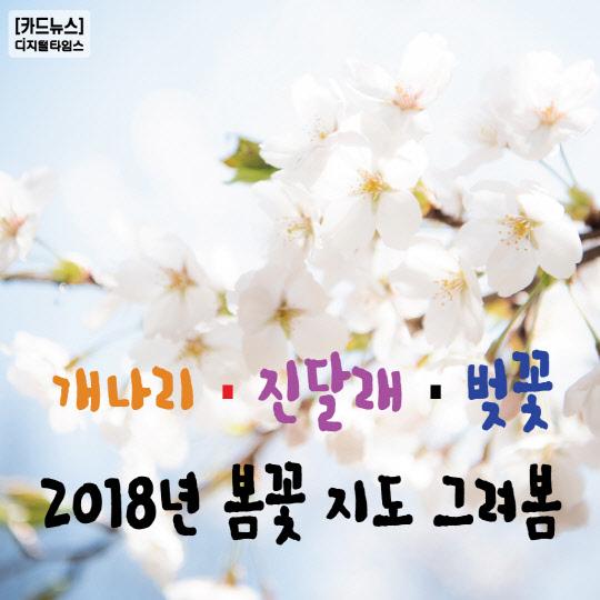 [카드뉴스] 2018년 봄꽃 지도 그려봄…개나리·진달래·벚꽃